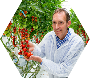 thesis about tomato Free essays on tomato get help with your writing 1 through 30.